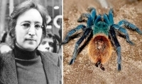 GIANT SPIDER SPECIES NAMED AFTER BEATLE